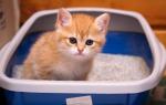 У кошки в моче кровь чем лечить