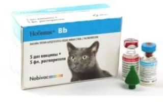 Прививка нобивак для кошек от каких болезней