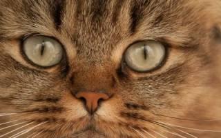 Как лечить пролежни кот