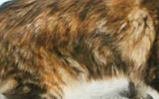 Понос у кошки лечение в домашних условиях