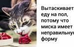 Правильный уход за кошкой