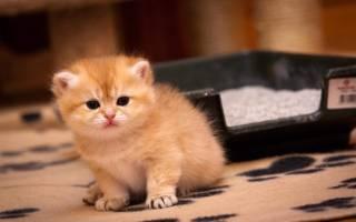Желтый понос у кота причины и лечение
