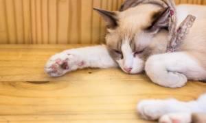 Ушиб лапы у кота лечение