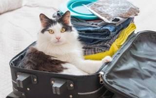 Уход котом время отпуска