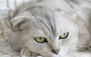 Ларингит у кошек симптомы и лечение