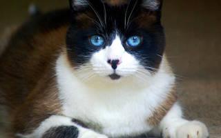 Перитонит у кошек лечение