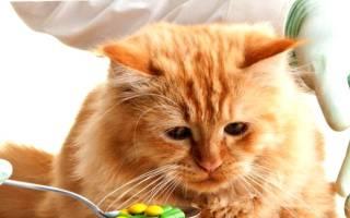Тяжелые болезни кошек