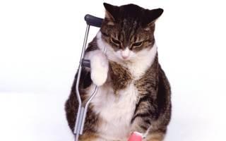К чему снится лечить кошку