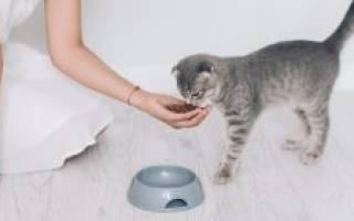 Как заставить кошку есть после болезни