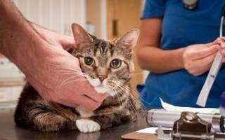 Сахарный диабет у кота симптомы и лечение