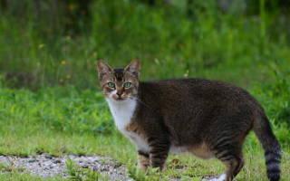Липидоз у кошек симптомы лечение
