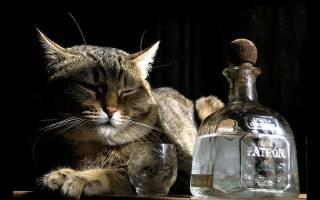 Лечение кошек водкой дозировка