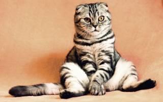 Чем лечить болячки у кошки