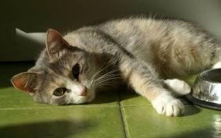 Поджелудочная железа у кота симптомы и лечение