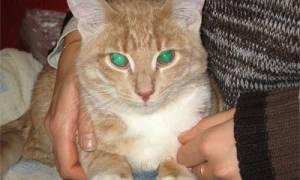 Чем лечить цистит у кота кастрированного