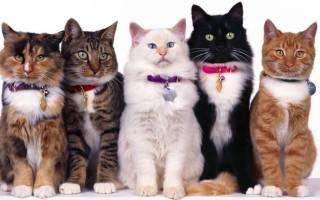 Какого цвета кошки лечат людей