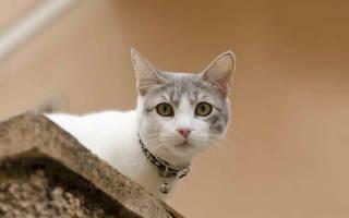 Чем лечить загноение глаз у кота