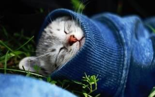 Ринит у кошек лечение в домашних