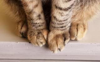Чем лечить отеки у кошек