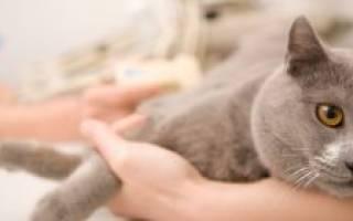 Кот чихает причины и лечение простуда