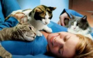 Правда что кошки забирают болезни