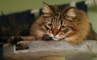 Какие болезни бывают у кошек