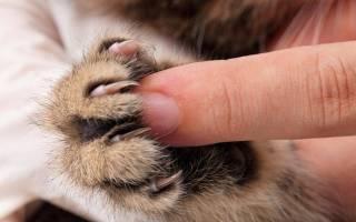 Поцарапал кот как лечить