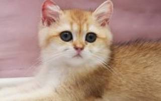 Лучшие корма для кошек при мочекаменной болезни