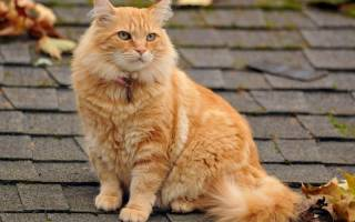 Мильбемакс лечение кошки