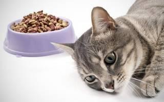 Воспаление кишечника у кота симптомы и лечение