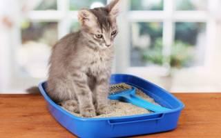 Бисакодил для лечения мегаколона у кота
