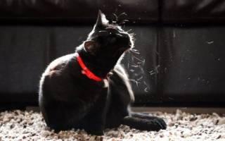Власоед у кошек лечение в домашних условиях