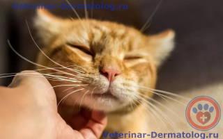 Как лечить у котов на бороде болячки