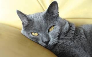 Лечение заворота века у кошки