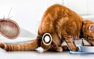 Фурагин коту при мочекаменной болезни