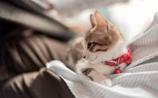 Поликистоз у кота лечение
