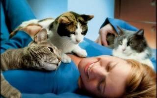 Лечение кошками детей