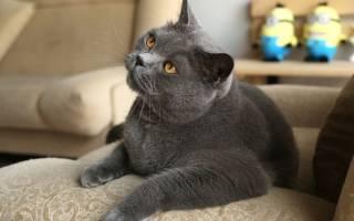 У кота белок в моче лечение