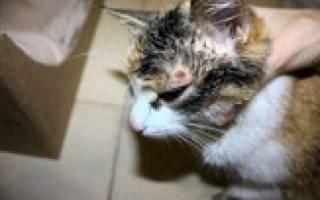 Домашние кошки болезни и лечение