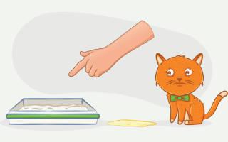 Недержание мочи у кота причины и лечение