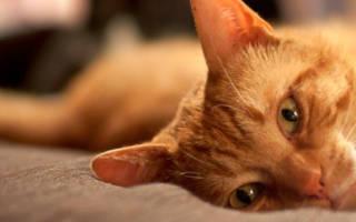 Лечение кошек коломенская