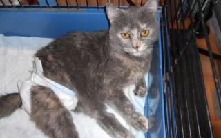 Уретрит у кошки симптомы и лечение