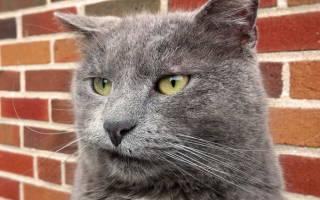 Пародонтоз у кошек симптомы и лечение