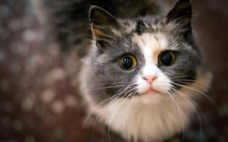 Паразиты у кошек лечение