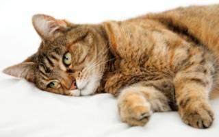 Кошка отравилась чем лечить в домашних условиях