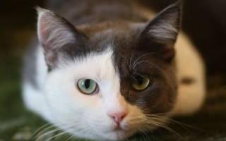 Колит у кота симптомы лечение