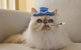 Консервы для кошек лечение жкт