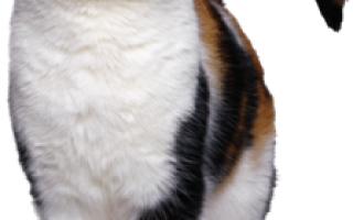 Болезни распространяемые кошками