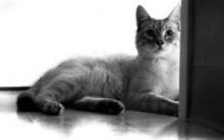 Кэг кошек лечение