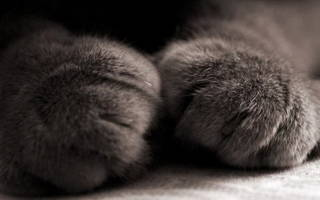 Мочекаменная болезнь у британских котов